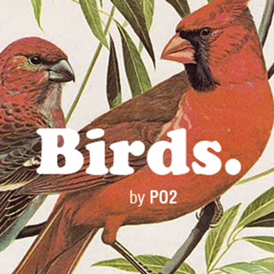 home-birds-idoia-otegui-arquitectura-thumbnail
